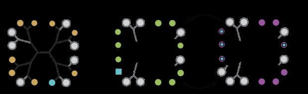 circle-groups